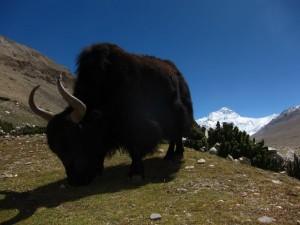 Beautiful Tibet II