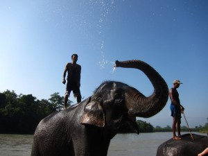 Sucking Diesel and Swimming With Elephants