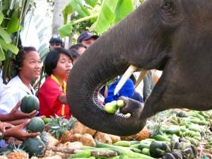 The Elephant Buffet